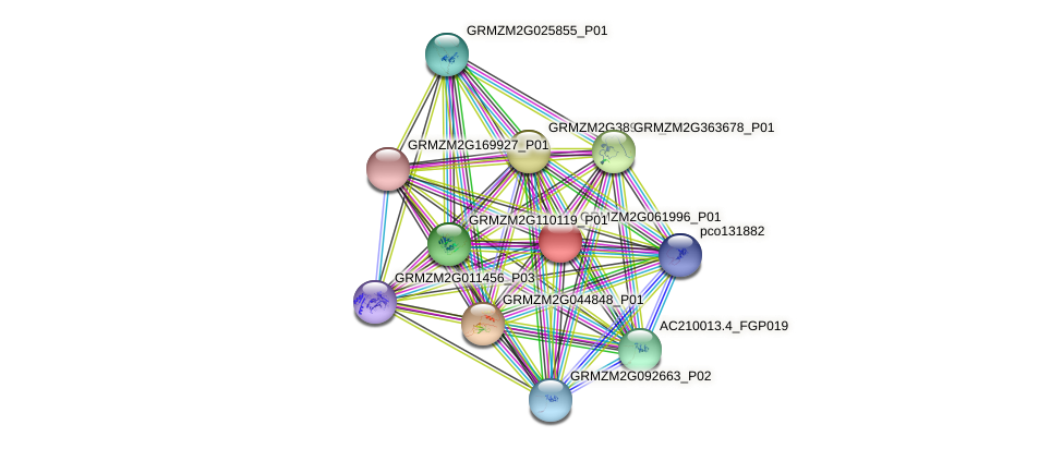 GRMZM2G061996_P01 protein (Zea mays) - STRING interaction network