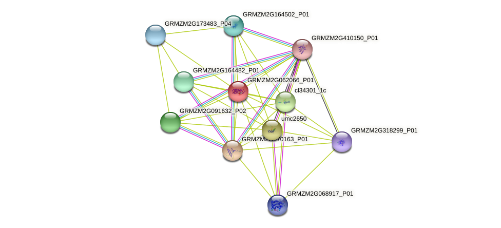 GRMZM2G062066_P01 protein (Zea mays) - STRING interaction network
