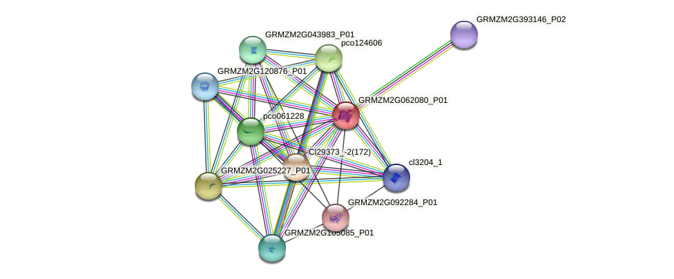 GRMZM2G062080_P01 protein (Zea mays) - STRING interaction network