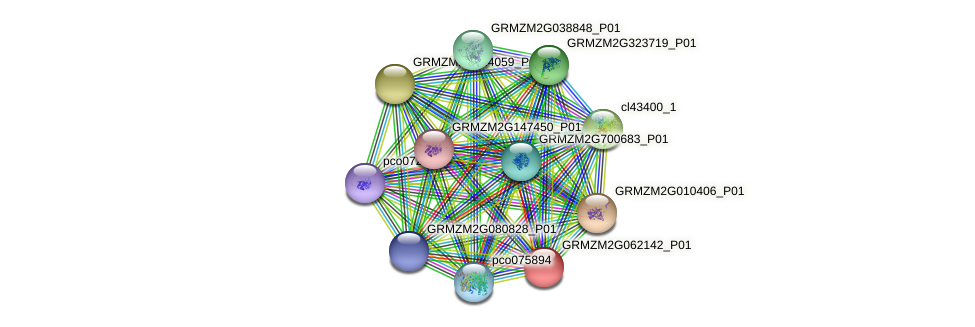 GRMZM2G062142_P01 protein (Zea mays) - STRING interaction network