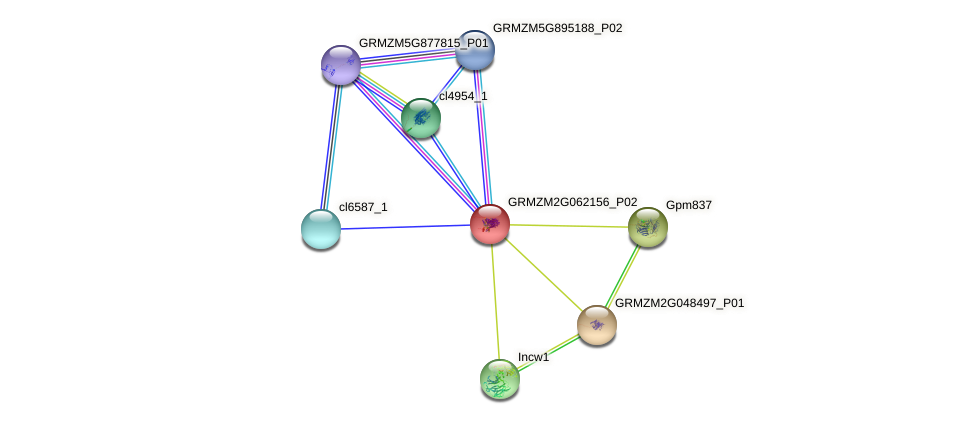 GRMZM2G062156_P02 protein (Zea mays) - STRING interaction network
