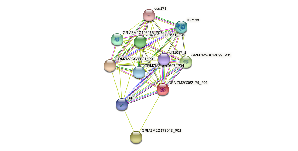 Zm.23837 protein (Zea mays) - STRING interaction network