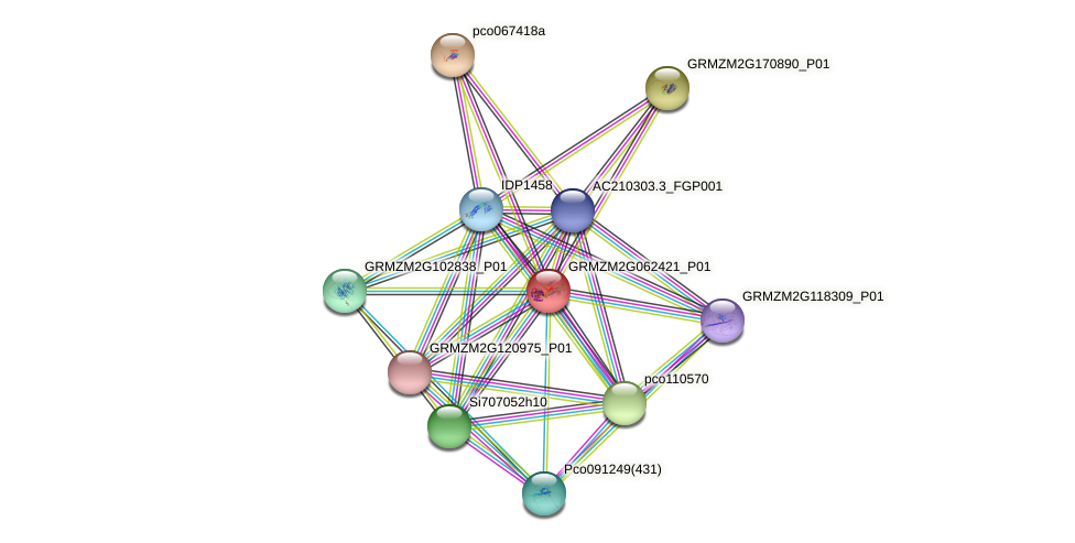 GRMZM2G062421_P01 protein (Zea mays) - STRING interaction network