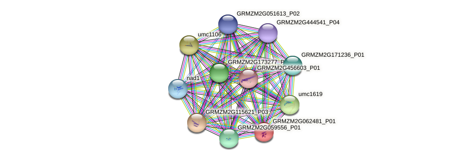 GRMZM2G062481_P01 protein (Zea mays) - STRING interaction network