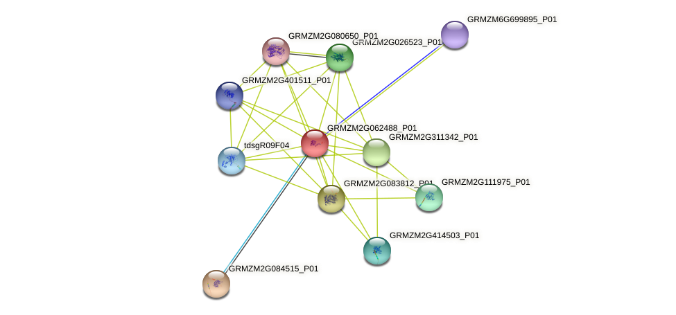 GRMZM2G062488_P01 protein (Zea mays) - STRING interaction network