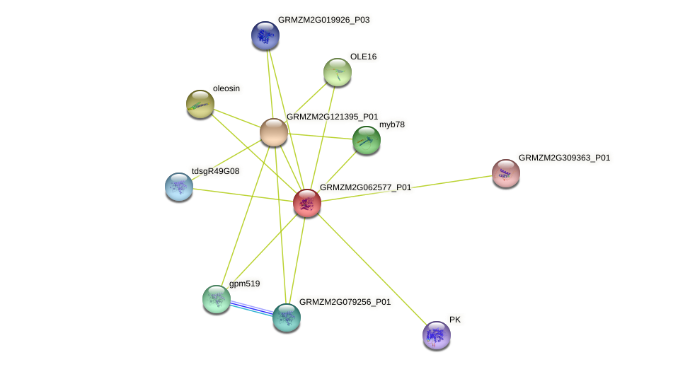 GRMZM2G062577_P01 protein (Zea mays) - STRING interaction network