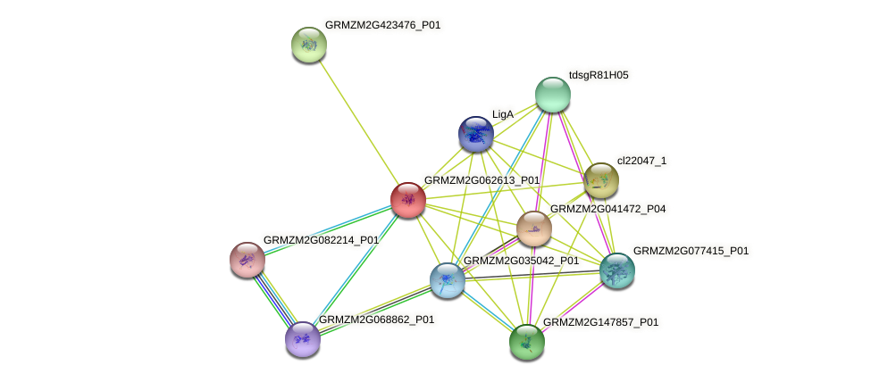 GRMZM2G062613_P01 protein (Zea mays) - STRING interaction network
