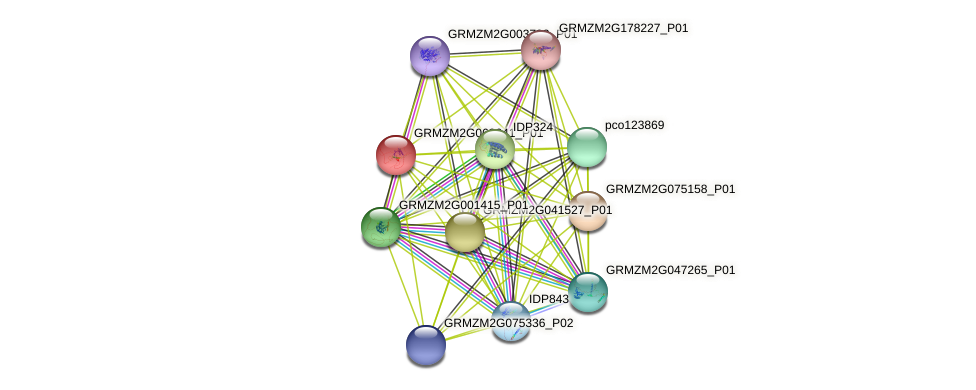 GRMZM2G062641_P01 protein (Zea mays) - STRING interaction network