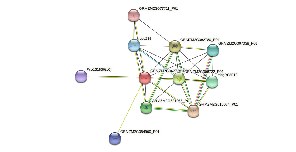 GRMZM2G062738_P01 protein (Zea mays) - STRING interaction network