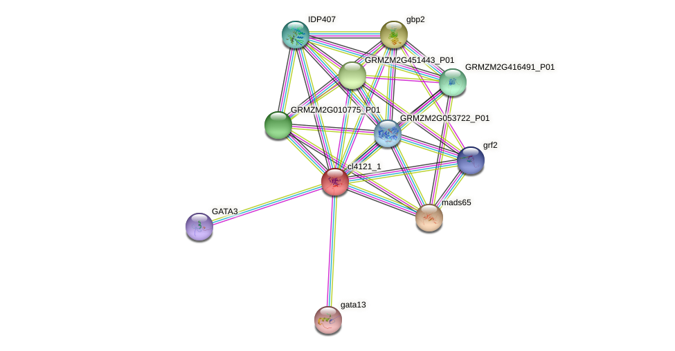 cl4121_1 protein (Zea mays) - STRING interaction network