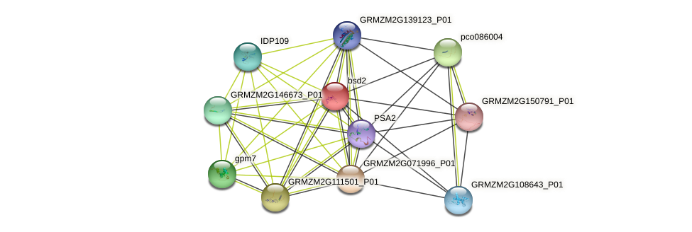 bsd2 protein (Zea mays) - STRING interaction network