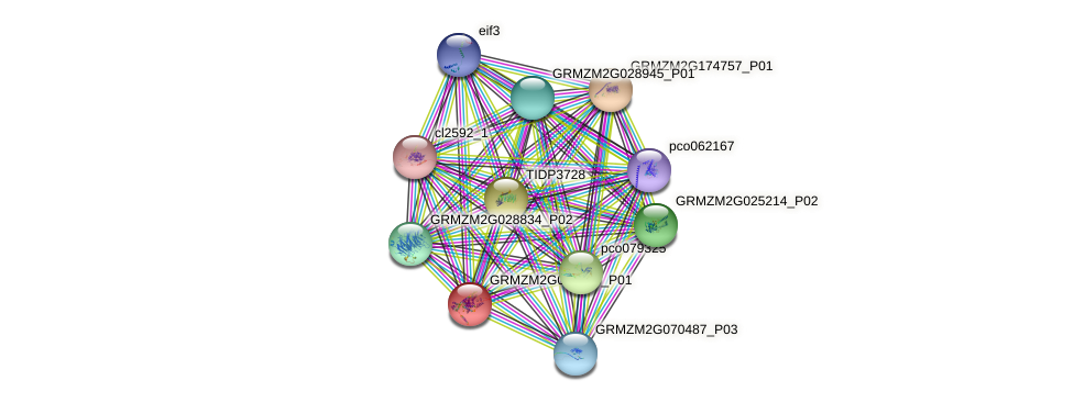 GRMZM2G062826_P01 protein (Zea mays) - STRING interaction network