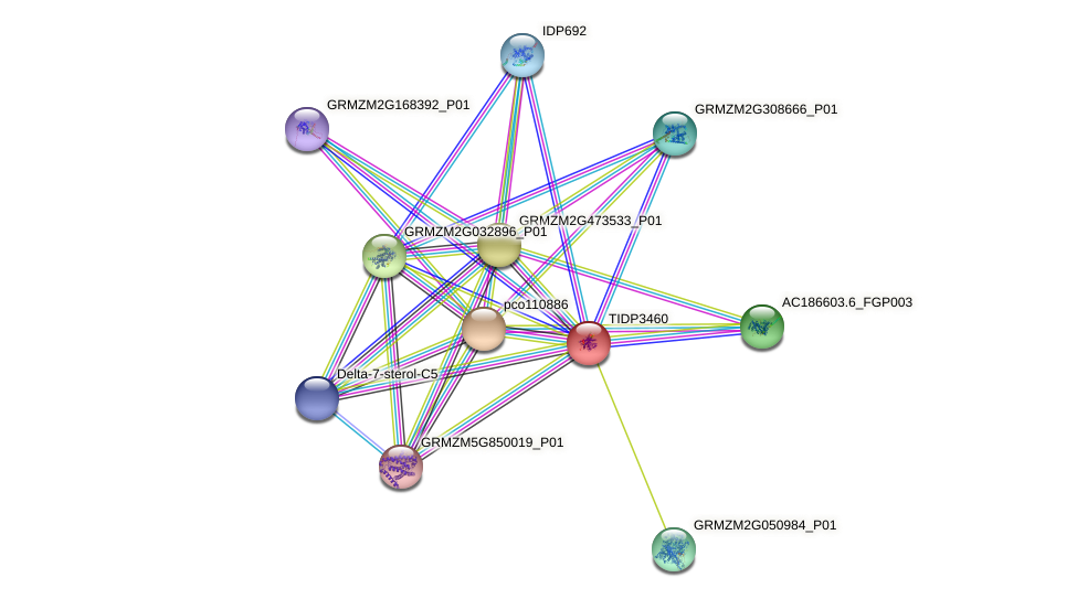 TIDP3460 protein (Zea mays) - STRING interaction network