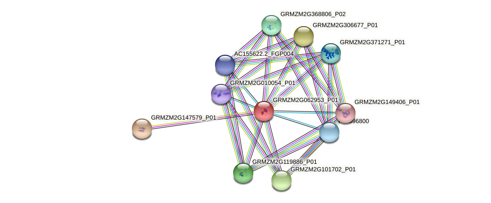 GRMZM2G062953_P01 protein (Zea mays) - STRING interaction network
