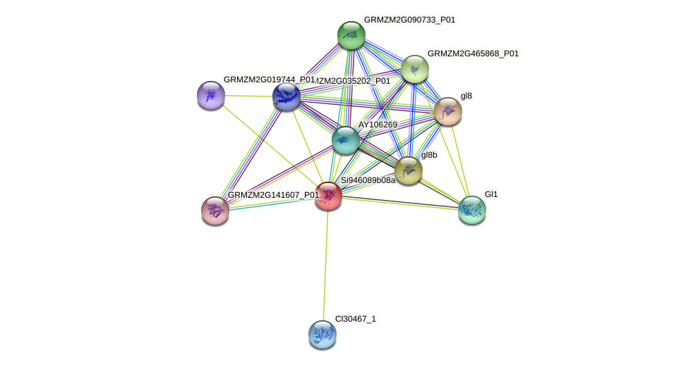 Zm.39267 protein (Zea mays) - STRING interaction network