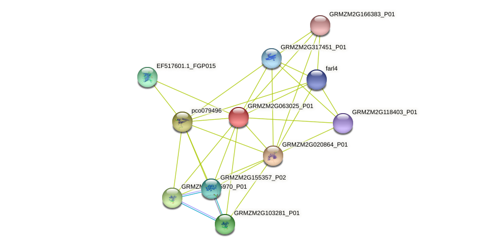 GRMZM2G063025_P01 protein (Zea mays) - STRING interaction network
