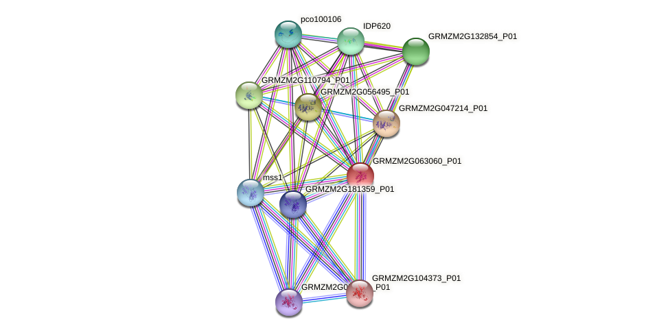 GRMZM2G063060_P01 protein (Zea mays) - STRING interaction network