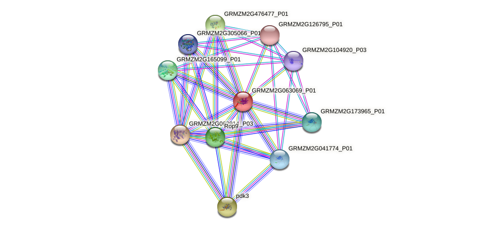 GRMZM2G063069_P01 protein (Zea mays) - STRING interaction network