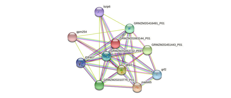 GRMZM2G063144_P01 protein (Zea mays) - STRING interaction network