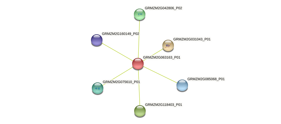 GRMZM2G063163_P01 protein (Zea mays) - STRING interaction network