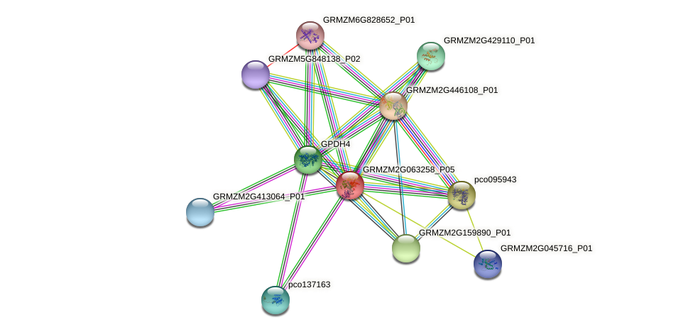 GRMZM2G063258_P05 protein (Zea mays) - STRING interaction network