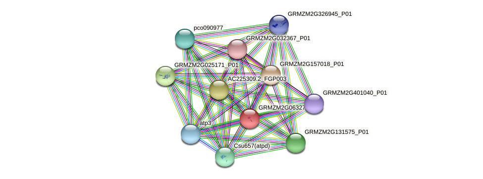 GRMZM2G063271_P01 protein (Zea mays) - STRING interaction network