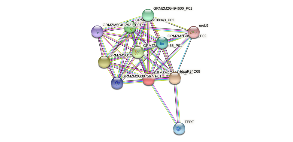 GRMZM2G063279_P01 protein (Zea mays) - STRING interaction network