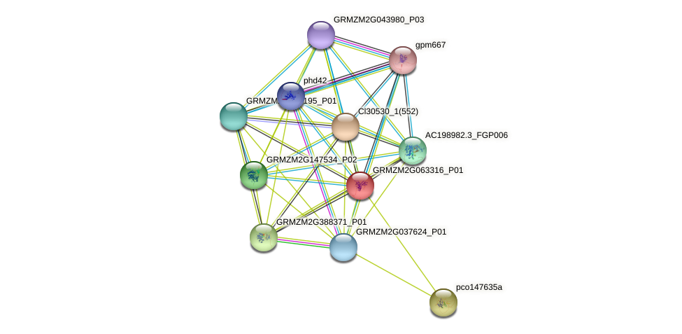 GRMZM2G063316_P01 protein (Zea mays) - STRING interaction network