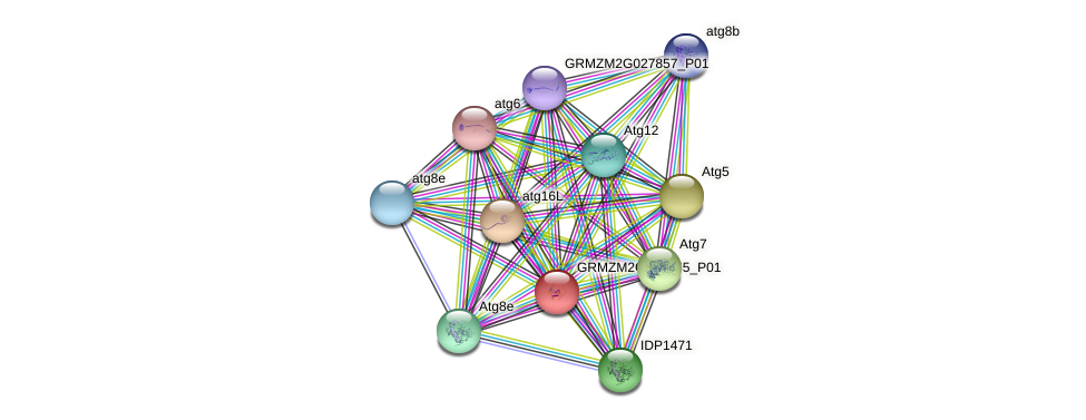 GRMZM2G063355_P01 protein (Zea mays) - STRING interaction network