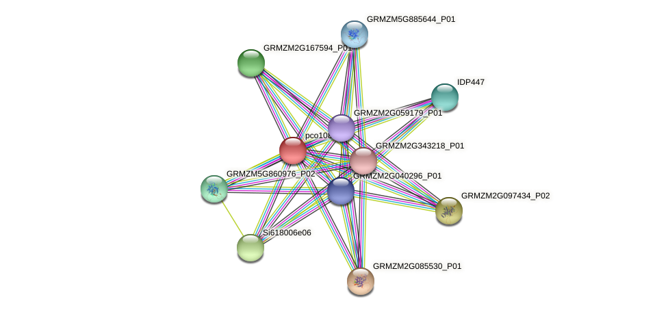 GRMZM2G063369_P01 protein (Zea mays) - STRING interaction network