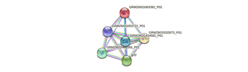 GRMZM2G063392_P02 protein (Zea mays) - STRING interaction network