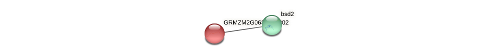 GRMZM2G063431_P02 protein (Zea mays) - STRING interaction network