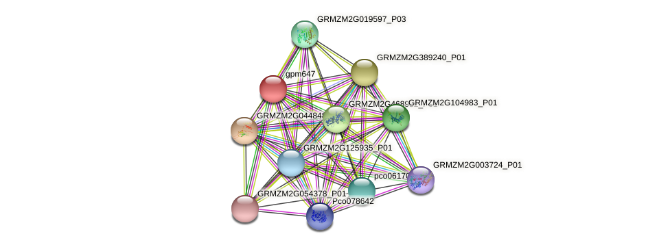 gpm647 protein (Zea mays) - STRING interaction network