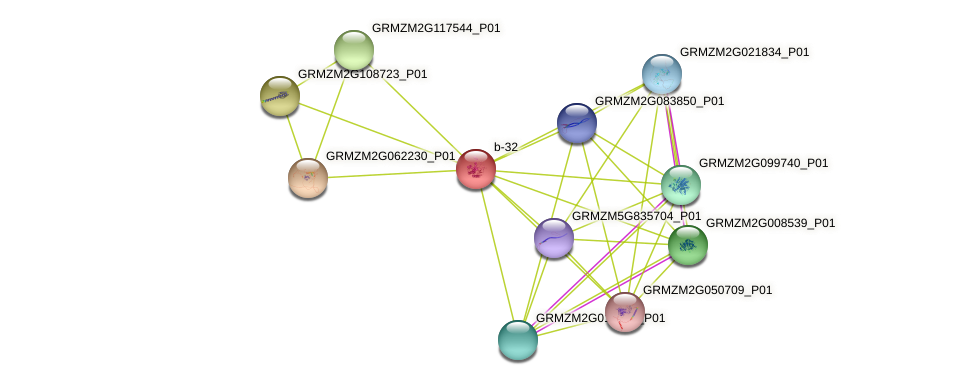 GRMZM2G063536_P01 protein (Zea mays) - STRING interaction network