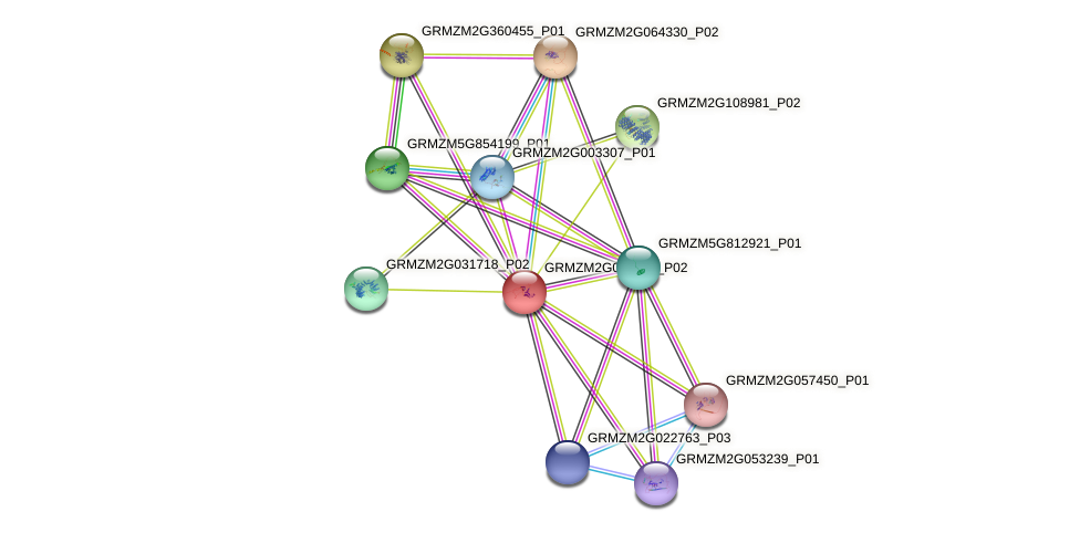 GRMZM2G063643_P02 protein (Zea mays) - STRING interaction network