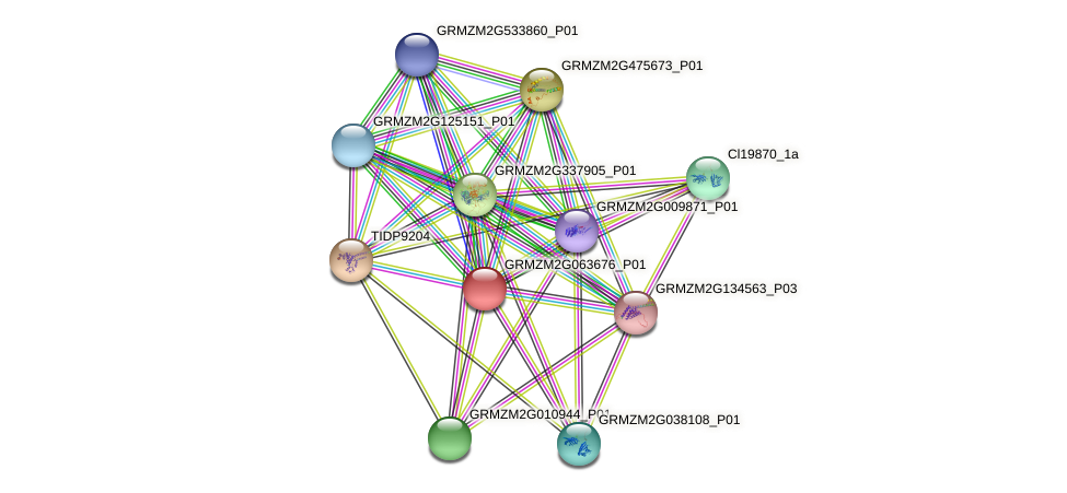 GRMZM2G063676_P01 protein (Zea mays) - STRING interaction network