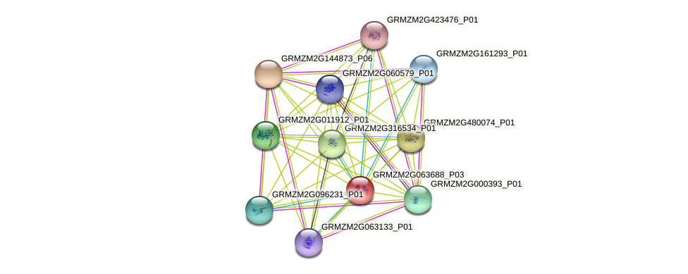 GRMZM2G063688_P03 protein (Zea mays) - STRING interaction network