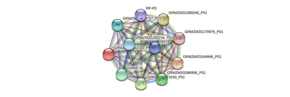 GRMZM2G063700_P02 protein (Zea mays) - STRING interaction network