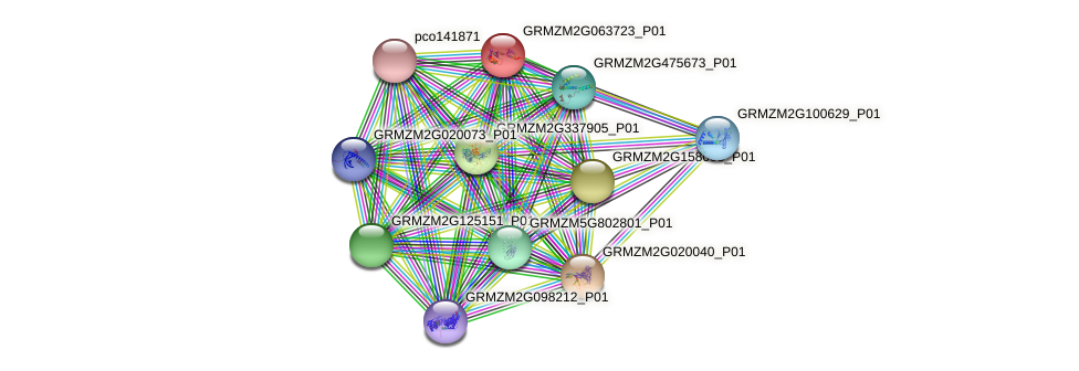 GRMZM2G063723_P01 protein (Zea mays) - STRING interaction network