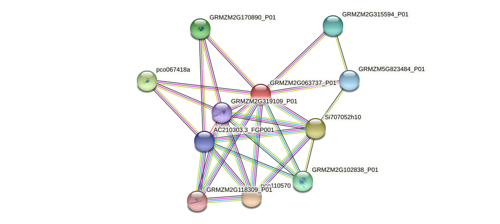 GRMZM2G063737_P01 protein (Zea mays) - STRING interaction network