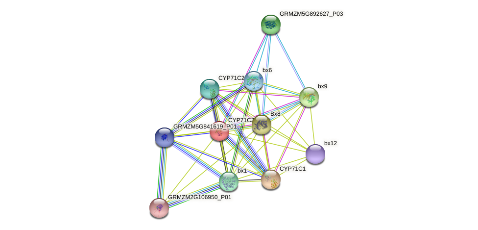 CYP71C3 protein (Zea mays) - STRING interaction network