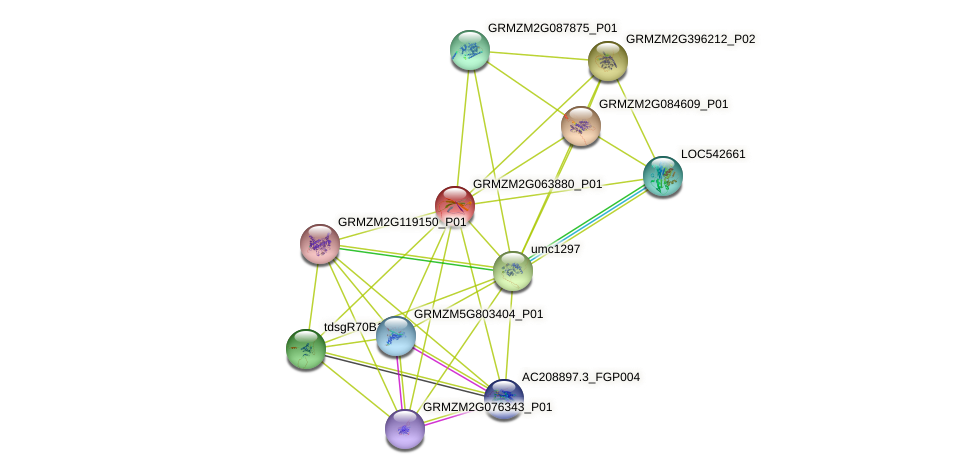 Zm.24608 protein (Zea mays) - STRING interaction network