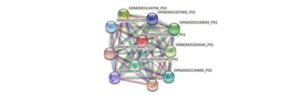 GRMZM2G063988_P01 protein (Zea mays) - STRING interaction network