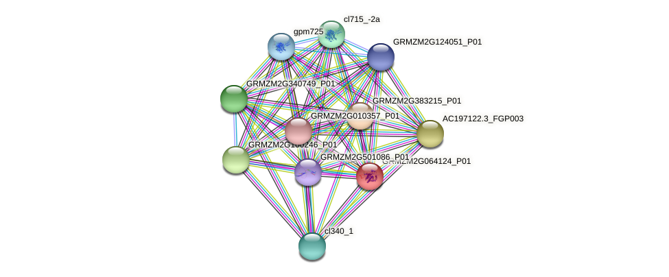 GRMZM2G064124_P01 protein (Zea mays) - STRING interaction network