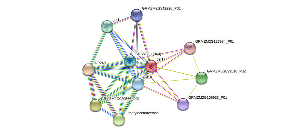 GRMZM2G064255_P02 protein (Zea mays) - STRING interaction network