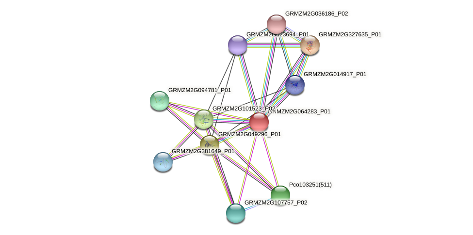 GRMZM2G064283_P01 protein (Zea mays) - STRING interaction network