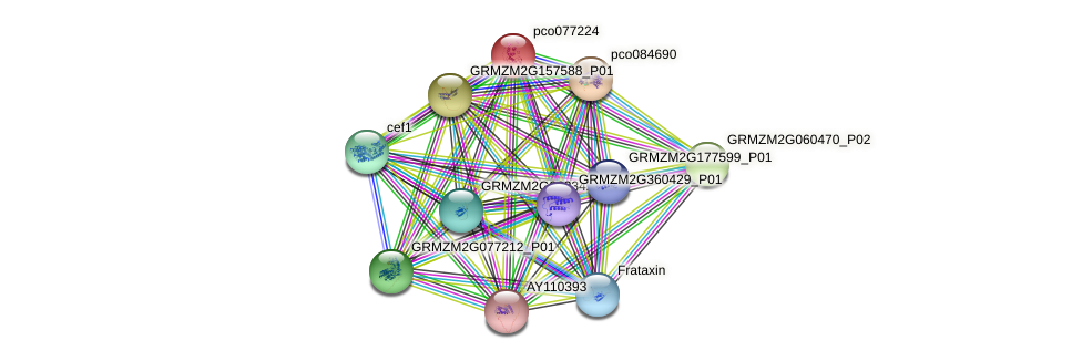 pco077224 protein (Zea mays) - STRING interaction network