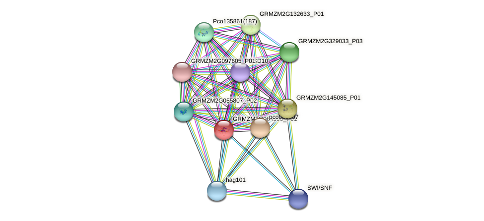 GRMZM2G064390_P01 protein (Zea mays) - STRING interaction network