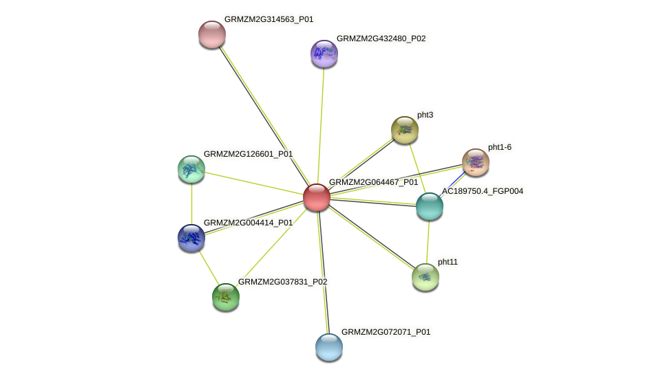 GRMZM2G064467_P01 protein (Zea mays) - STRING interaction network