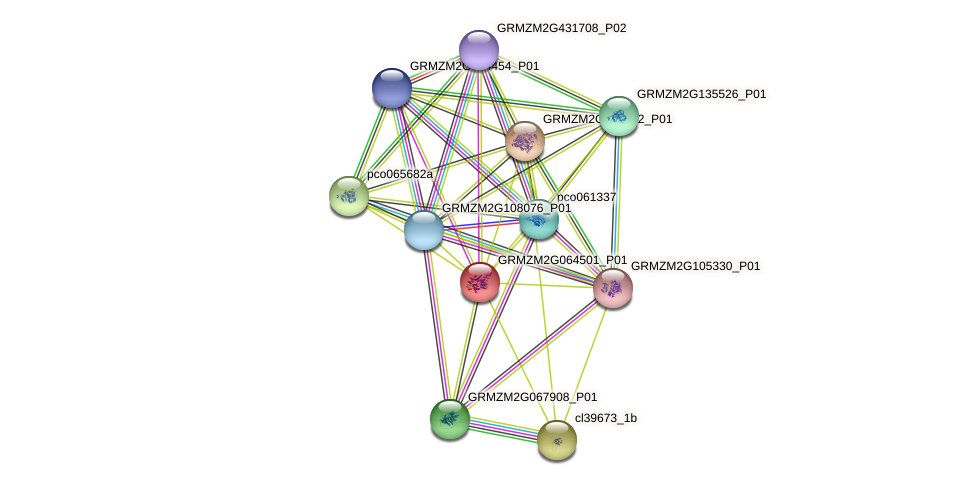 GRMZM2G064501_P01 protein (Zea mays) - STRING interaction network